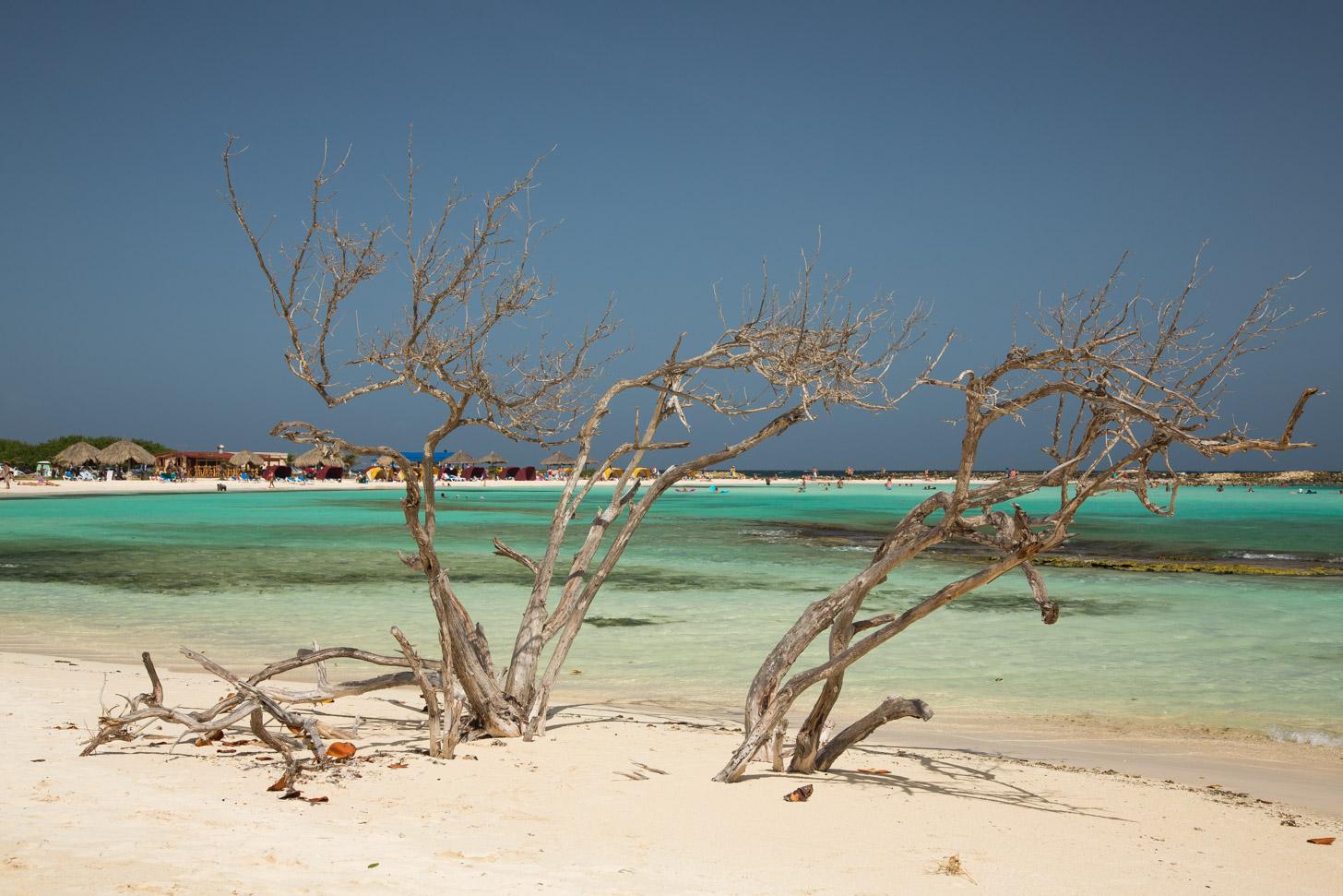 Uitgedroogde divi-bomen op het strand van Aruba